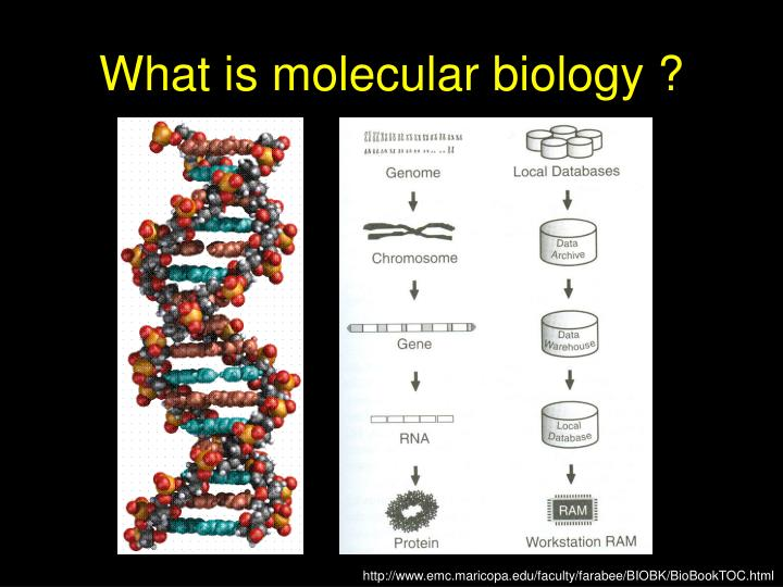 What is molecular biology ?