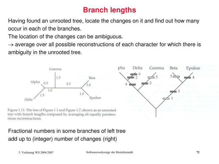 Branch lengths
