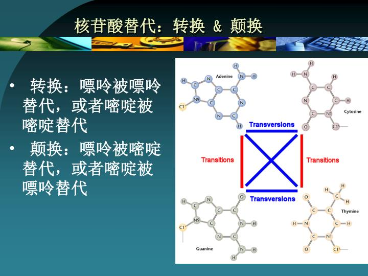 核苷酸替代:转换