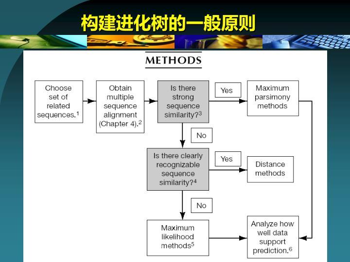 构建进化树的一般原则