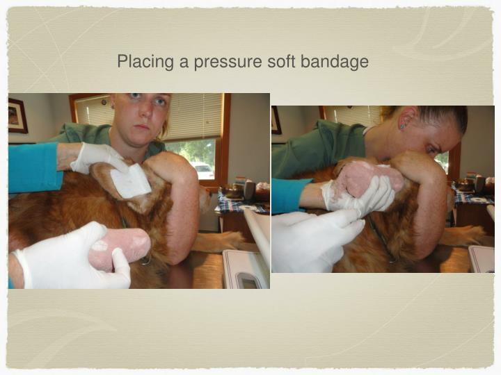Placing a pressure soft bandage