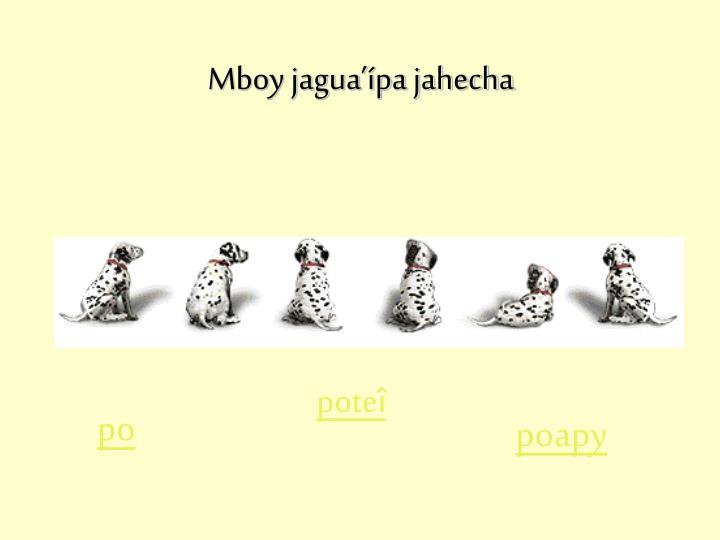 Mboy jagua'ípa jahecha