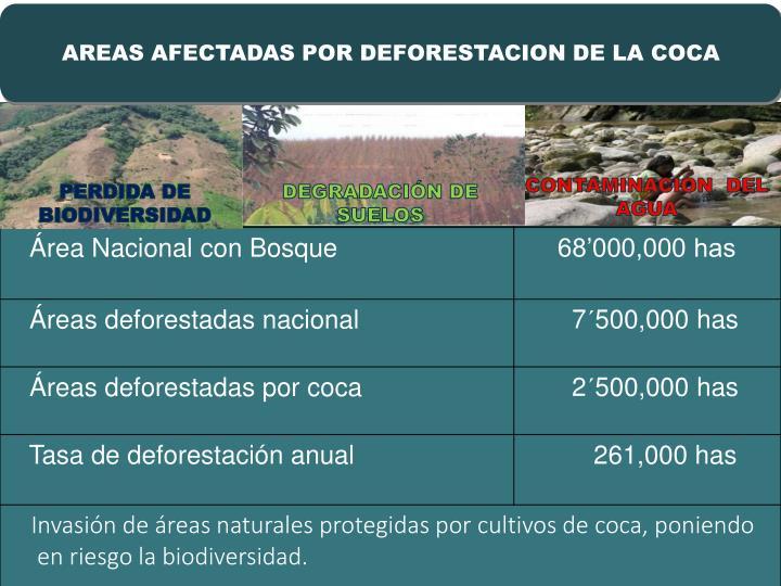 AREAS AFECTADAS POR DEFORESTACION DE LA COCA