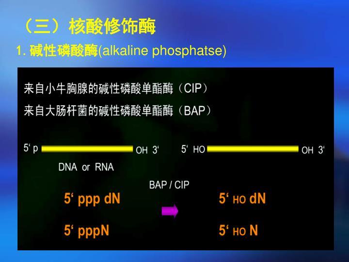 (三)核酸修饰酶