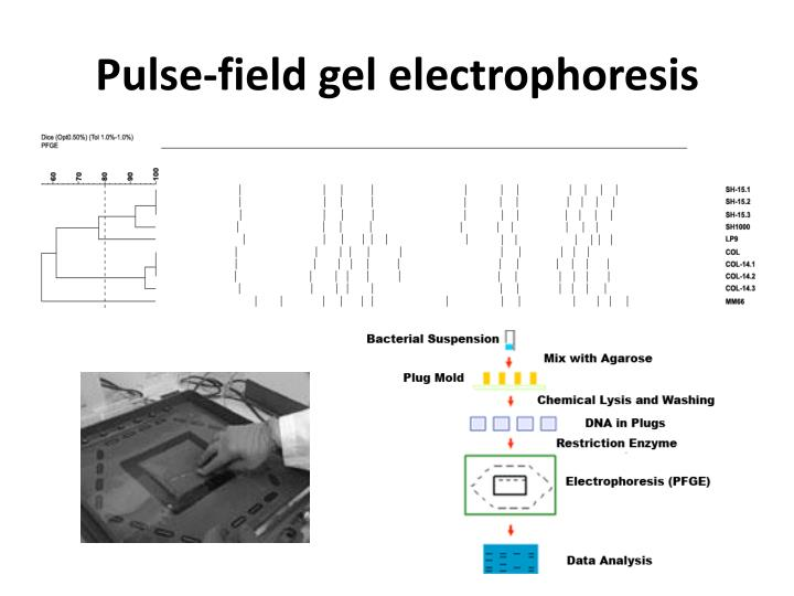 Pulse-field gel electrophoresis