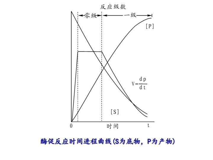 酶促反应时间进程曲线