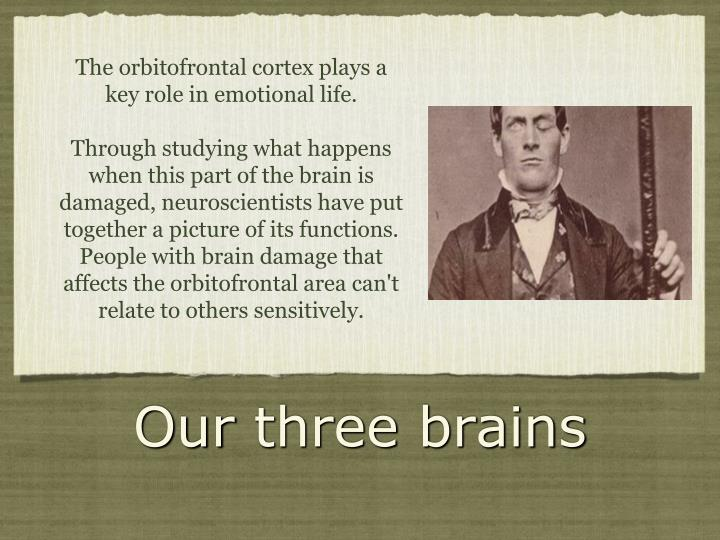 The orbitofrontal cortex plays a key role in emotional life.