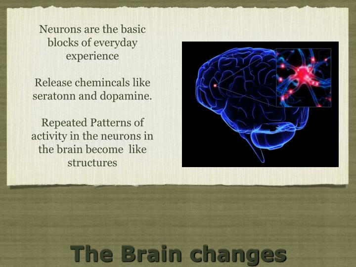 Neurons are the basic blocks of everyday experience