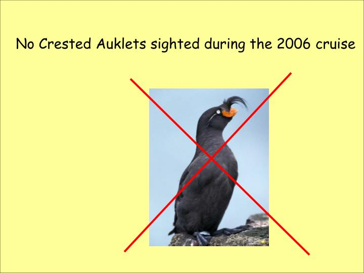 No Crested Auklets sighted during the 2006 cruise