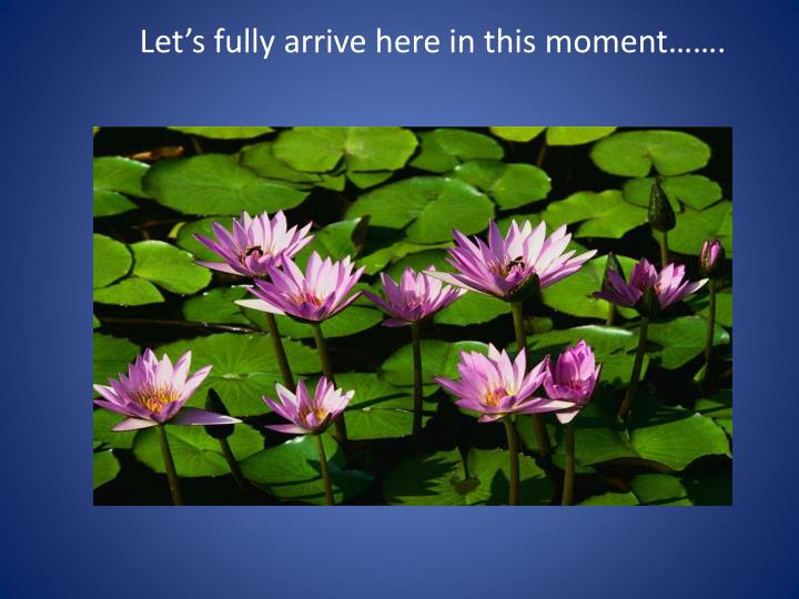 Let's fully arrive here in this moment…….