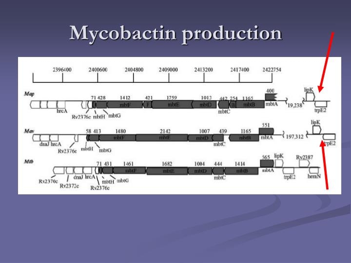 Mycobactin production