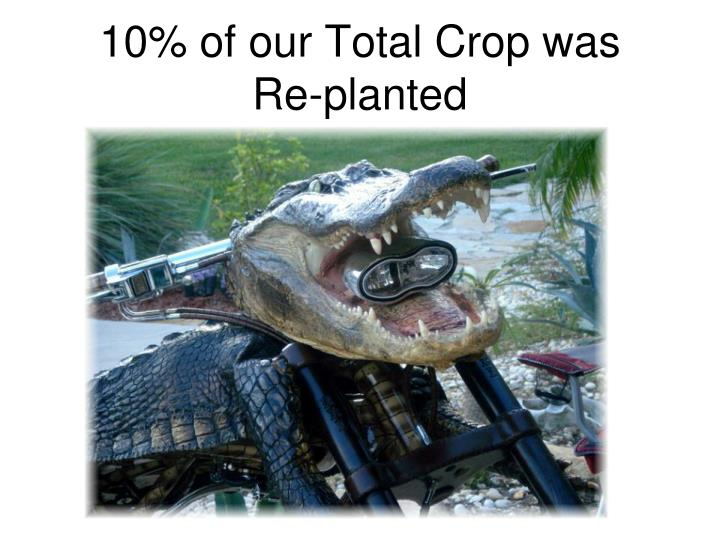 10% of our Total Crop was