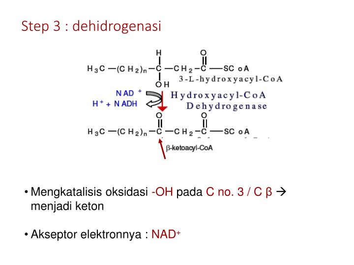 Step 3 : dehidrogenasi