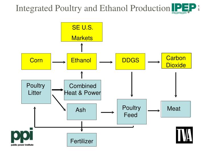 Integrated Poultry and Ethanol Production