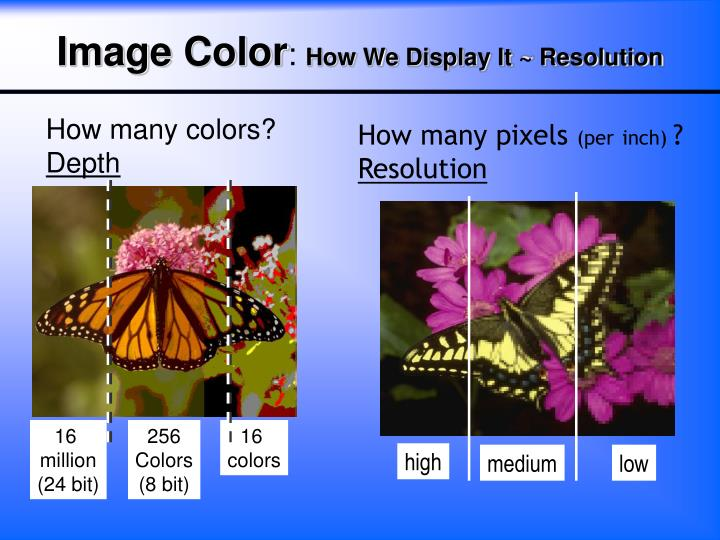 How many colors?