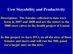 cow stayability and productivity1