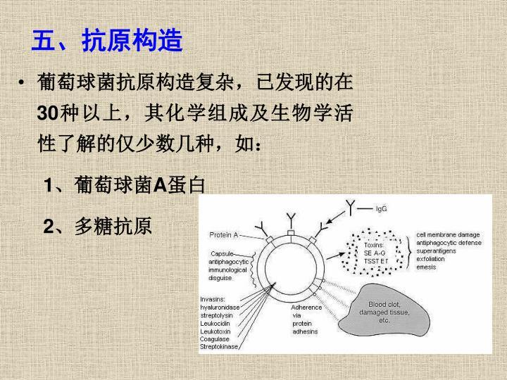 五、抗原构造