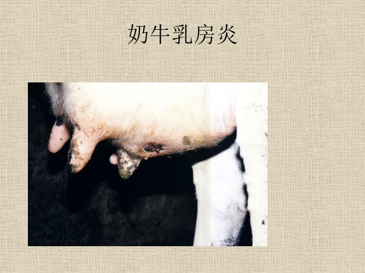 奶牛乳房炎