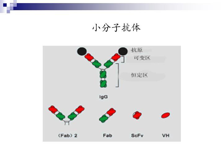 小分子抗体