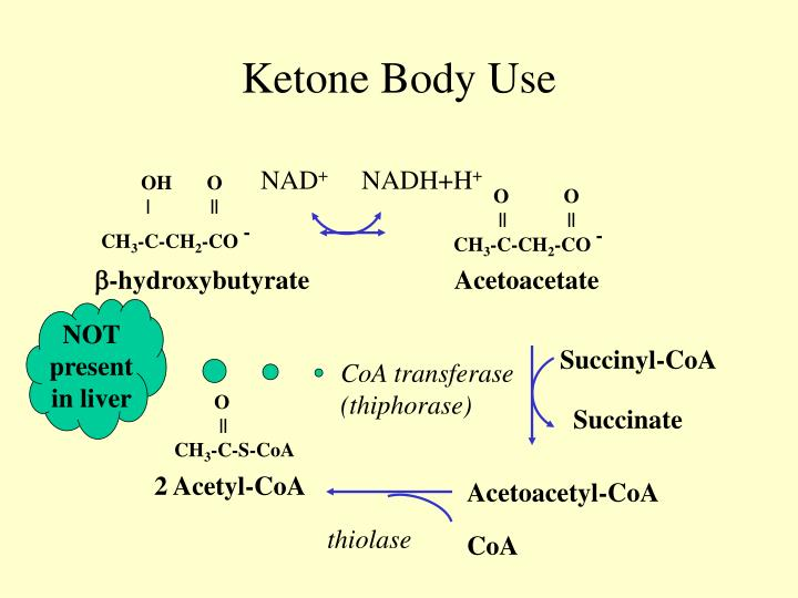 Ketone Body Use