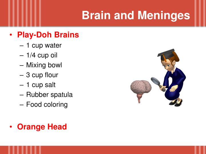 Brain and Meninges