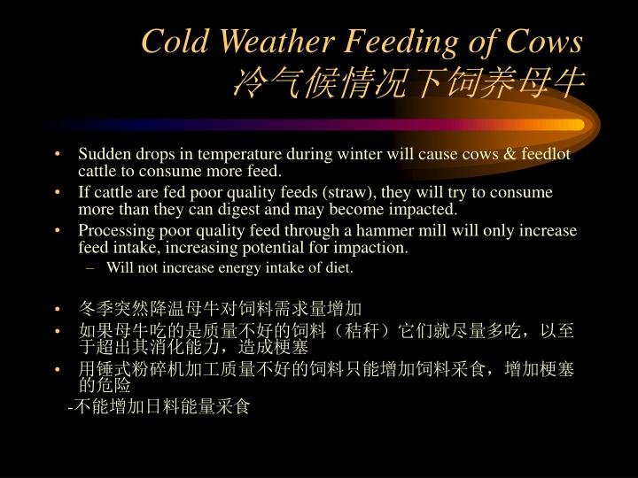 Cold Weather Feeding of Cows
