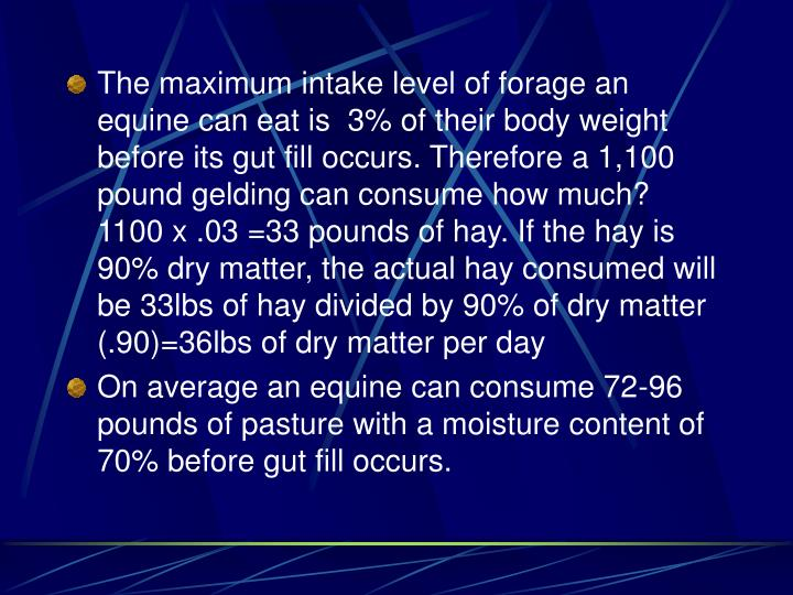 The maximum intake level of forage an equine can eat is  3% of their body weight before its gut fill occurs. Therefore a 1,100 pound gelding can consume how much? 1100 x .03 =33 pounds of hay. If the hay is 90% dry matter, the actual hay consumed will be 33lbs of hay divided by 90% of dry matter (.90)=36lbs of dry matter per day