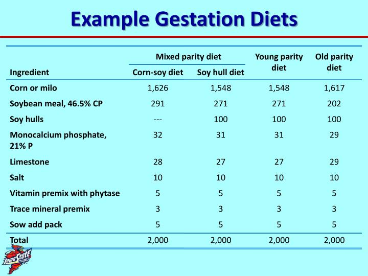 Example Gestation Diets