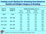 feeding levels lb day for gestating sows based on backfat and weight category at breeding