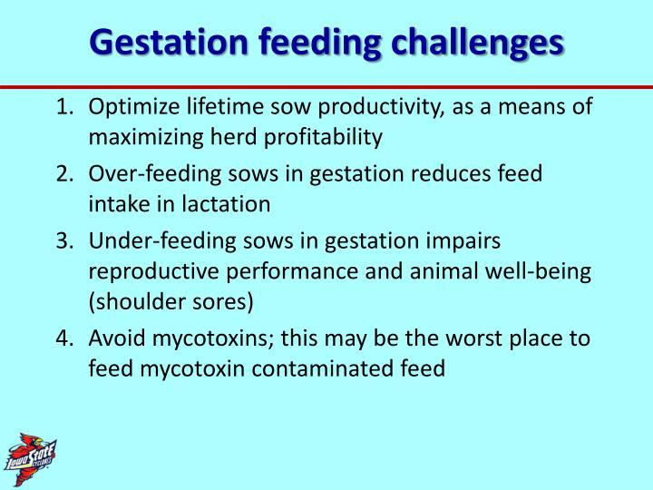 Gestation feeding challenges