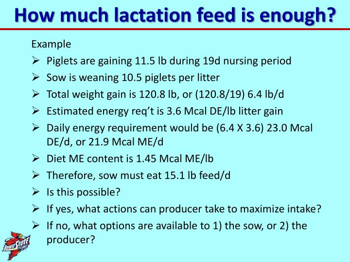 How much lactation feed is enough?