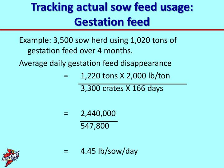 Tracking actual sow feed usage: Gestation feed