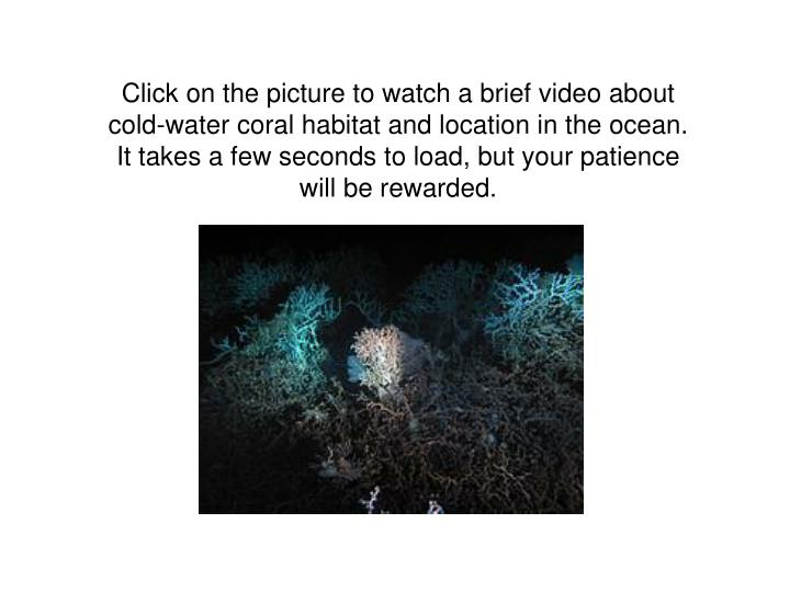 Click on the picture to watch a brief video about cold-water coral habitat and location in the ocean.  It takes a few seconds to load, but your patience will be rewarded.