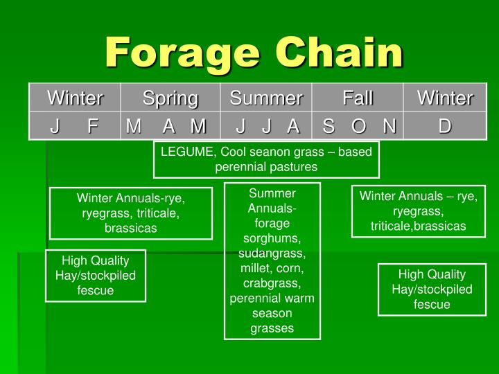 Forage Chain