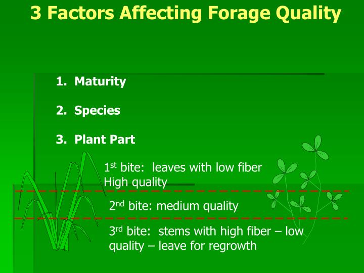 3 Factors Affecting Forage Quality