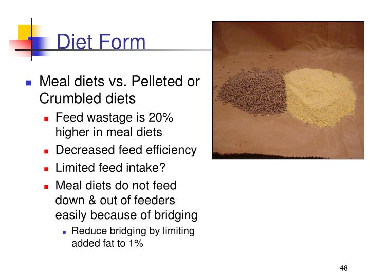 Diet Form