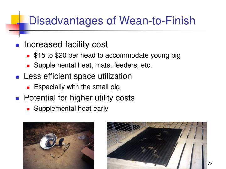 Disadvantages of Wean-to-Finish