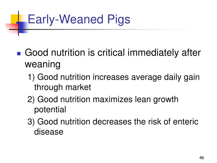 Early-Weaned Pigs