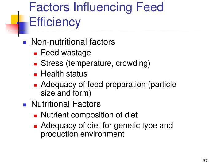 Factors Influencing Feed Efficiency