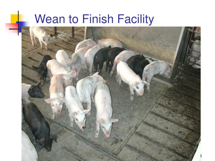 Wean to Finish Facility