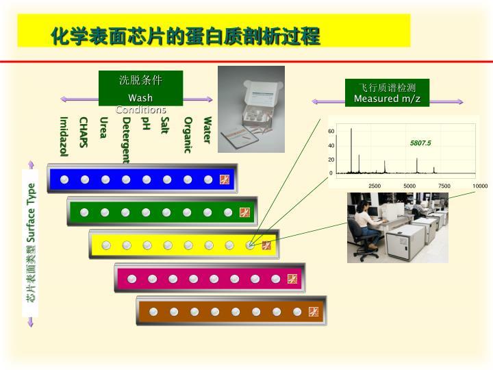 化学表面芯片的蛋白质剖析过程