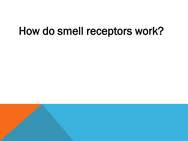 How do smell receptors work?