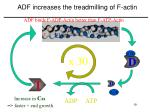 adf increases the treadmilling of f actin