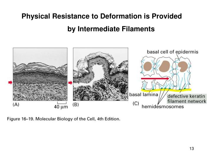 Physical Resistance to Deformation is Provided