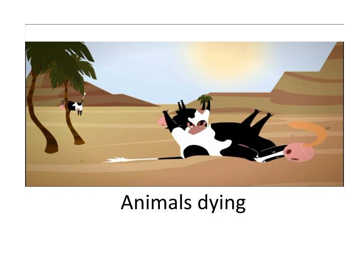 Animals dying