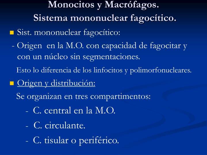 Monocitos y Macrófagos.