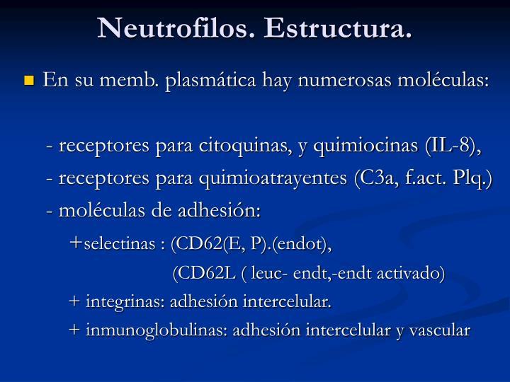 Neutrofilos. Estructura.
