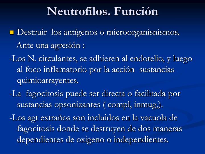 Neutrofilos. Función