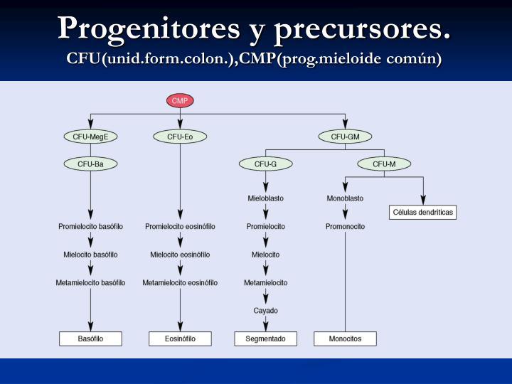 Progenitores y precursores.