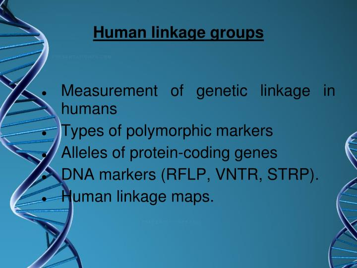 Human linkage groups